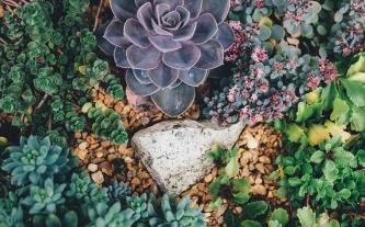 succulents-1030982_1920 (1)