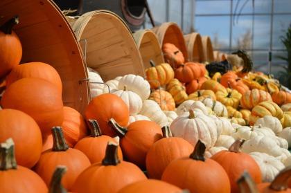 gourds-949112_1920.jpg
