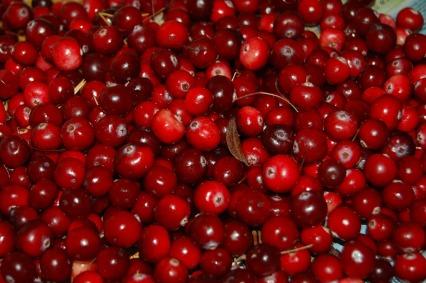 cranberries-957583_1920